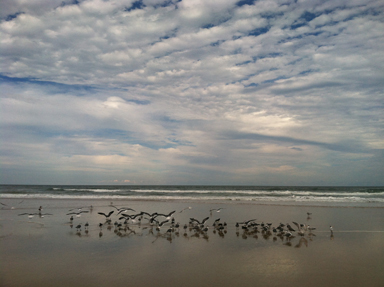 daytona gulls by lisa ritchie